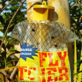 House Fly Trap-Herbal-Disposable